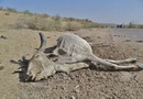 Drought Situation in Tharparkar